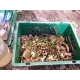 Beetbox ohne Würmer
