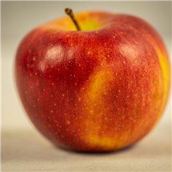 Apfel 'Braeburn' Busch C7,5