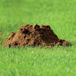 Bodennägel 100 Stück für Maulwurfschutznetz, Bodennägel für