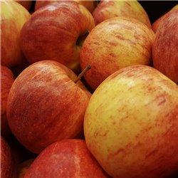 Apfel 'Gala' Busch C7,5, GALA, GALA APFELBAUM KAUFEN, Apfelbaum