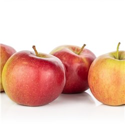 Apfel 'Jonagold' Busch C7,5