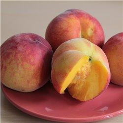 Pfirsich 'Kernechter vom Vorgebirge' Halbstamm C10, Prunus
