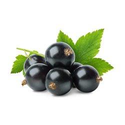 Johannisbeere schwarz 'Titania' Co 2,5l
