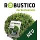 Ilex crenata Robustico 30-40 - die Buxalternative