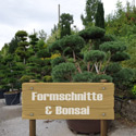 Formschnitte & Bonsai