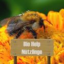 BioHelp Nützlinge