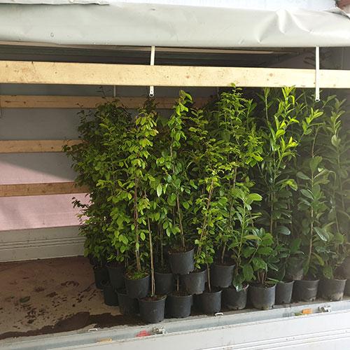 Gartengarten Pflanzenversand Abhollager 2042 Grund