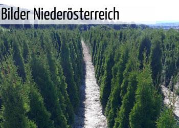GartenGarten Produktion Niederösterreich