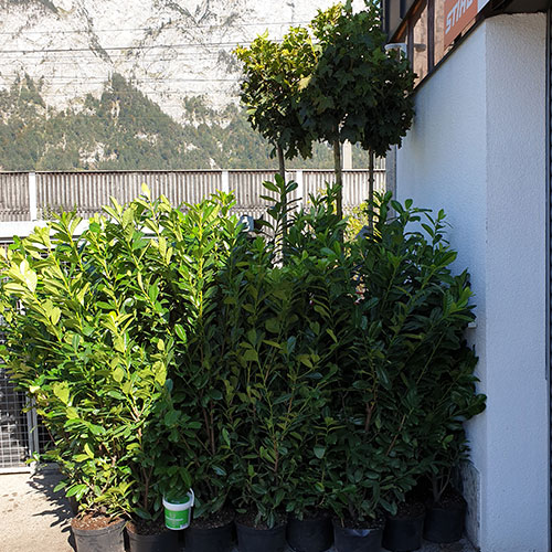 GartenGarten Bilder Kundenlieferung