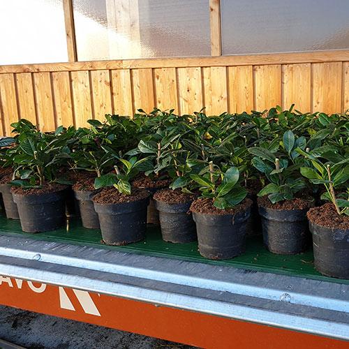 GartenGarten Produktion Oberösterreich