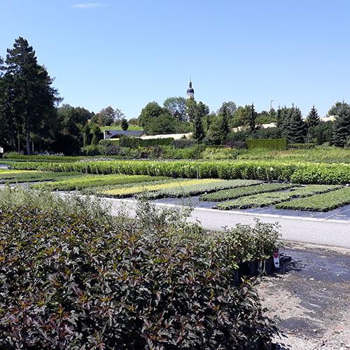 GartenGarten Produktion Salzburg