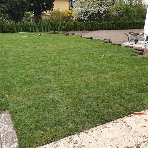 Verlegung Rollrasen Gartengarten